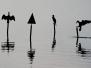 Il mio fiume: l'Adda – Foto di Michele Masullo