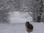 Miniconcorso La neve e il gelo - Gennaio/febbario 2012