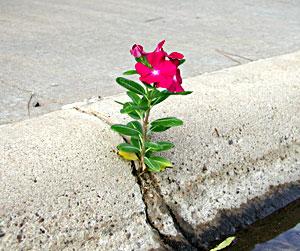 fiore_cemento