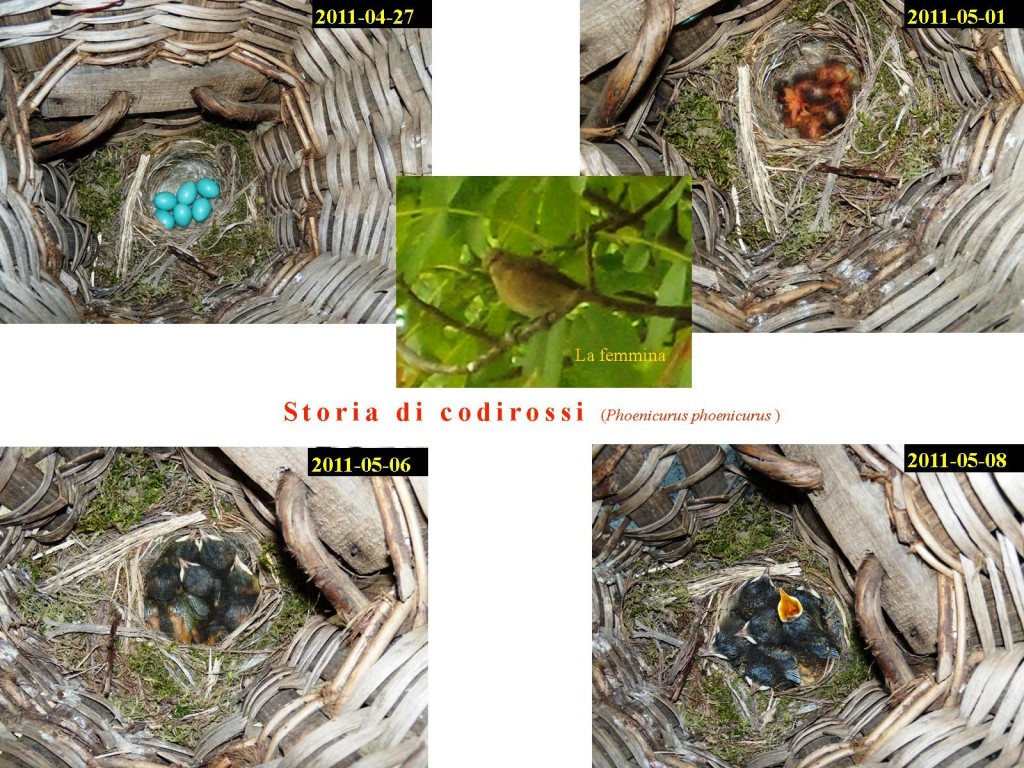 2011-05-08 update codirossi(pub)