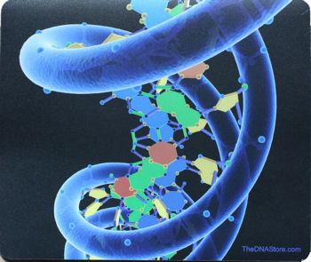 DNA1b