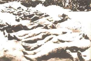 caduti coprili col bianco soffice mantello