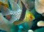Sotto il segno dei pesci (05.03.2011) - Foto Sebastiano Guido