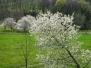 La primavera alla fine arriva (18.03.2010) - Foto Giandomenico Spreafico